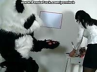 Большая панда ебет учительницу