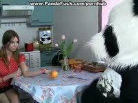 Панда заглянула в гости